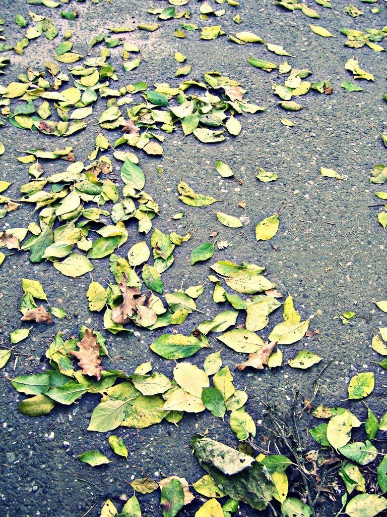 Toamna cu frunze galben-verzui