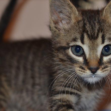 Știți de ce pisicile se atașează de o singura persoana!?
