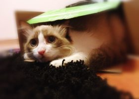 Fotografii funny! Pisica rasfatata!