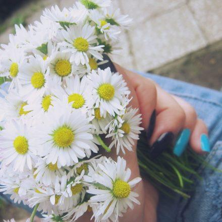 Lumea florilor – citate, proverbe si zicatori