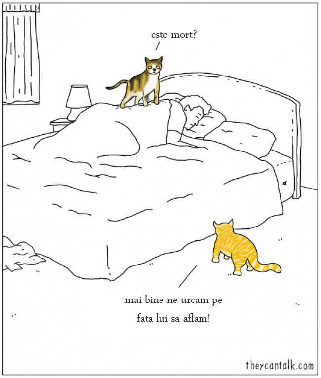 animale cu umor
