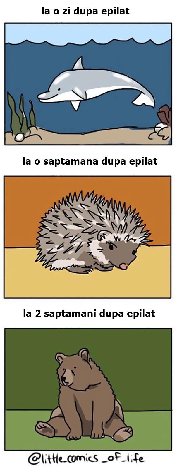 ilustratii-epilat