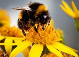 10 Lucruri pe care nu le stiai despre albinele care produc miere