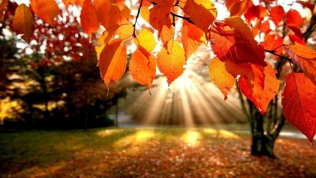 Toamna - sezonul culorilor, a traditiilor si superstitiilor!